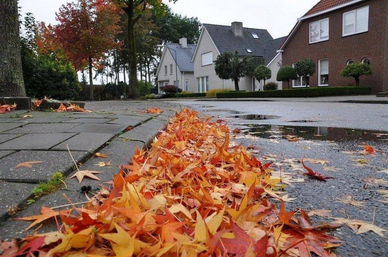 gisterochtend was het echt herfst met veel regen en wind. De bladeren krijgen het dan ook steeds moeilijker. De foto werd gemaakt door Ban Saanen.