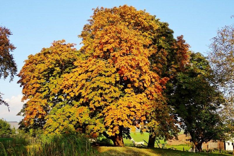 de kastanjebomen beginnen geleidelijk te verkleuren. Deze prachtige herfstfoto werd gemaakt door Ton Wesselius.