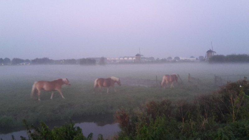 de dag begon gisteren rustig met hier en daar nevel en mist. Deze schitterende foto werd gemaakt door Johan Klos.