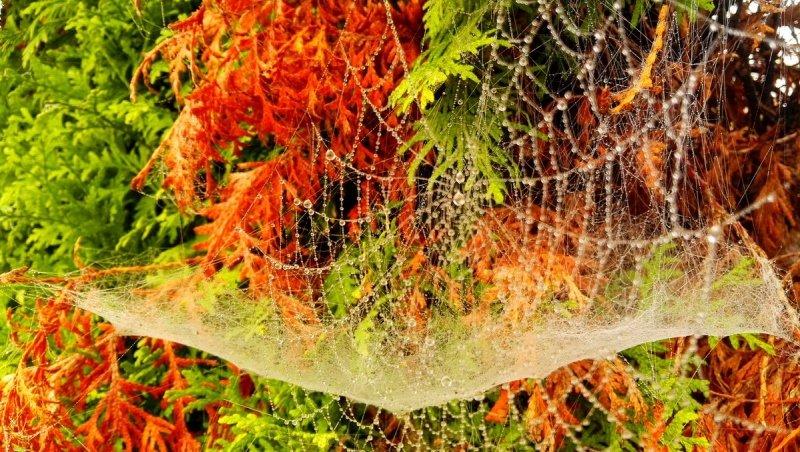 Joyce Derksen maakte een prachtige herfstfoto.