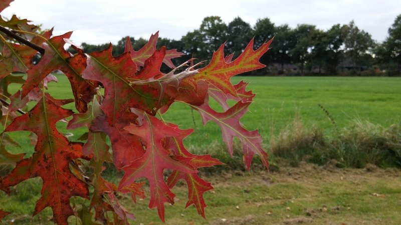 de herfst is nu toch echt begonnen en de verkleuring gaat, mede ook door de lage temperaturen, hard. De foto werd gemaakt door Martin Vye.