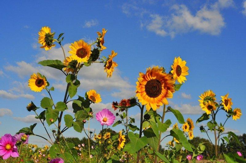 Een vriendelijk zomers getinte aanblik, bij een koude noordoostenwind, aldus Ben Saanen.