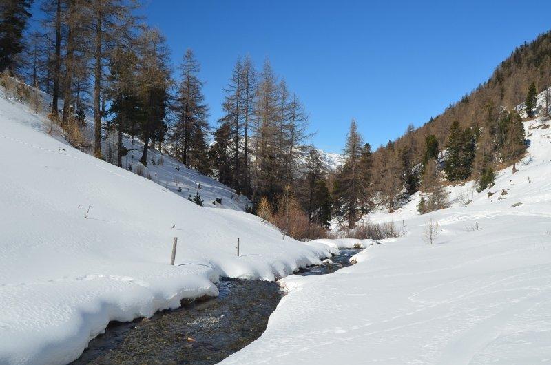Na zeker een half uur skiën kom je bij de afdaling van de Vallon d'Arbi is een bosrijke omgeving met prachtige beekjes