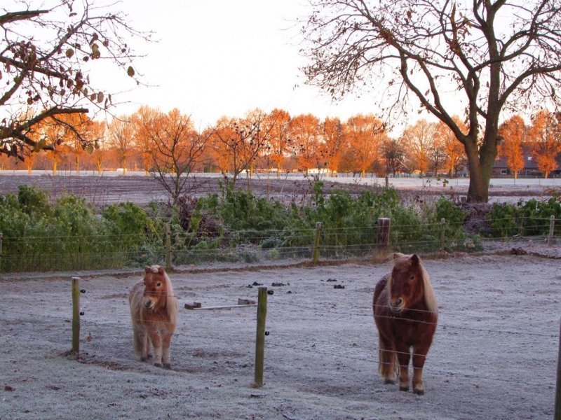ook Carina Lichtenberg maakte een prachtige foto van de koude start van gisteren.