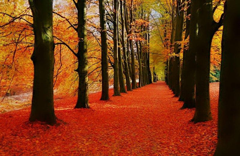 de prachtig gekleurde bladeren vallen wel erg snel. Deze schiiterende foto werd gemaakt door Joyce Derksen.