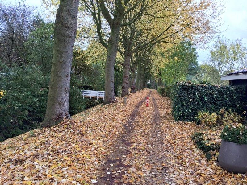 de bomen worden nu snel kaal. Deze foto werd gemaakt door Arno van Brakel.