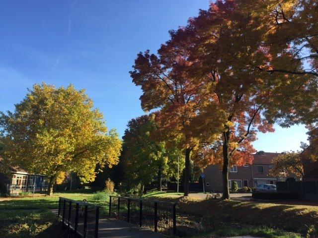 Peter van Lindenberg maakte ook een mooie herfstfoto van de prachtige kleuren.