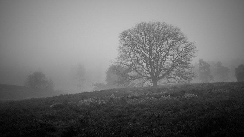 een prachtige zwart/wit foto gemaakt door Bernd Twiest. Het geeft heel mooi de donkere dagen voor Kerst aan.
