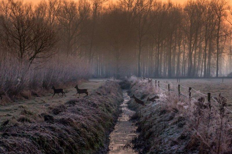 Marinus de Keijzer (@betuwefotograaf) maakte deze schitterende foto gisterochtend van springende reeën.